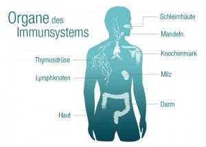 contramutan_content_immunsystem